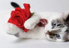Valentine Day Kitty